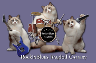 Ragdoll Kittens for Sale Gulf Coast AL | RockinBlues Rags